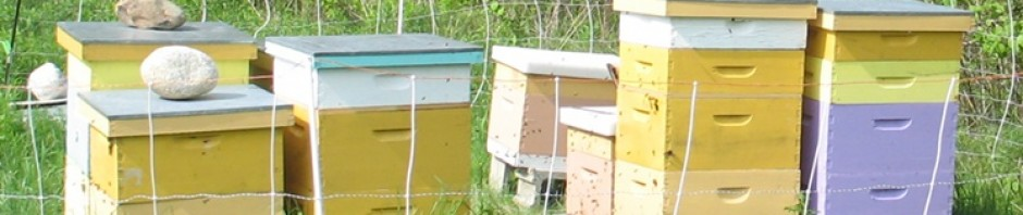 Honey Beekeeping in Maine